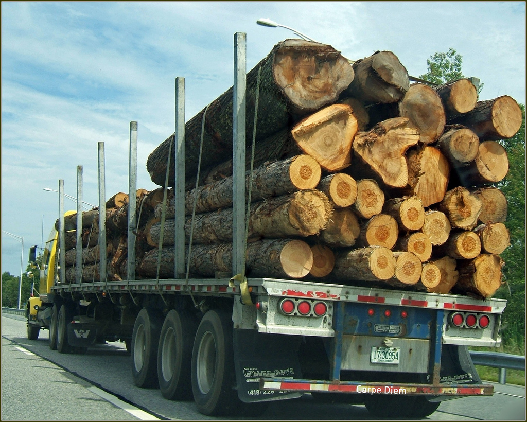 Taking steps to minimise risk of prosecution is vital in industries such as the logging business ... photo by CC user tonythemisfit on Flickr