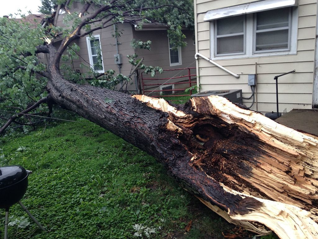 By learning how to remove a tree properly, you can avoid damage to property