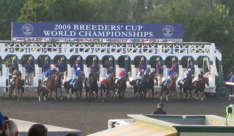 Do you know What to Watch for at the 2017 Breeders' Cup?