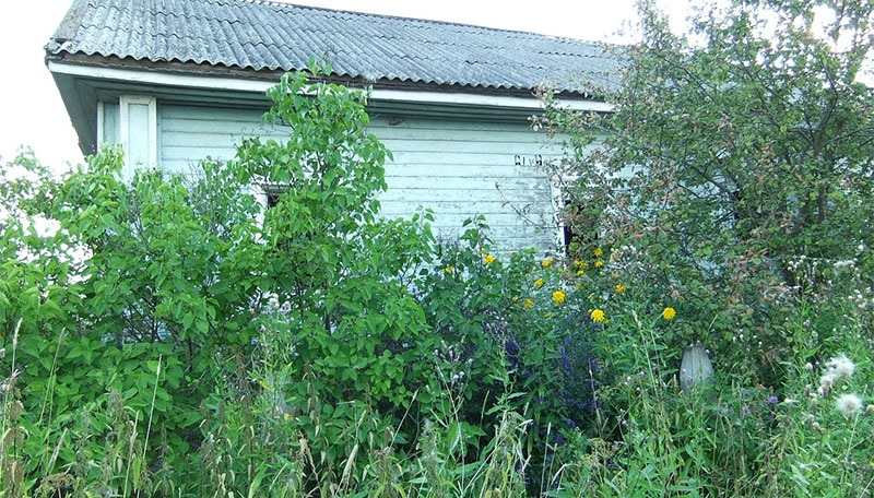 Knowing How to Reclaim a Wild Yard can bring your property back up to snuff